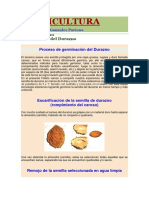 Germinación Del Durazno _ FRUTICULTURA.