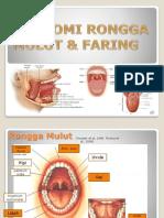 Anatomi Mulut Dan Faring