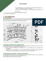 Najeeb Notes by SAQ (Final) | Brainstem | Central Nervous System
