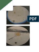 Protozoarios, Bacteria