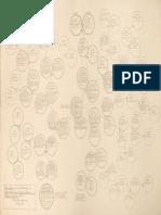 Genealogía de doña María Ignacia Carrillo de Córdova.