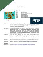 cacing Diphyllobothrium latum.pdf