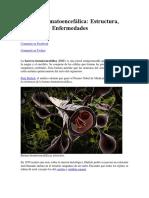 Barrera Hematoencefálica