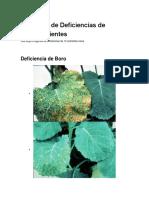 Imágenes de Deficiencias de Micronutrientes