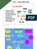 7_DKH 2011 - KULIAH - BIOKIMIA D3 - Metabolisme Protein (29 AP