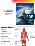 7. Muscular System