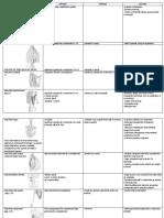 8 MUSCHII SPATELUI TABEL..pdf