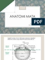 Anatomi mata.pptx