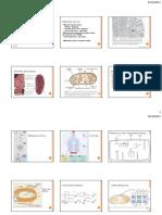 Aula Metabolismo 2 - 6 Slides Por Folha