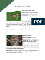 Listado de Reptiles de Nicaragua.pdf
