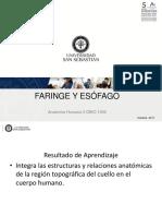 Faringe y Esofago DBIO 1056 201720