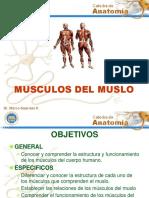 14musculos Del Muslo