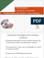 FISIOLOGIA II Corteza Cerebral
