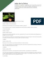 Plantas Medicinales de La Selva