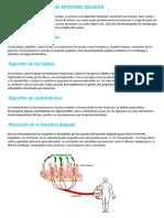 Funciones Del Intestino Delgado