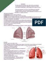 8 Pulmones
