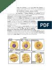 Mitosis y Meiosis Ok y Actividades