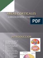 areascorticalesfrontalyparietal-170523214727
