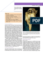 Patologias Sistema Locomotor