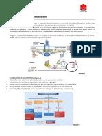 Clase 23 y 24 Regulacion Hormonal Del Metabolismo(2)