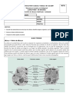 laboratorioobservaciondecelulas-130507140651-phpapp02