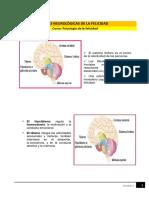 Lectura - Bases Neurológicas de La Felicidad