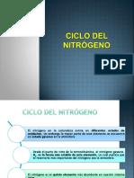 14 Ciclo Del Nitrógeno