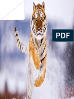 4k Image Tiger Jumping