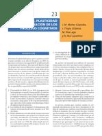 Neurciencias - Plasticidad y Recuperación de Los Procesos Cognitivos