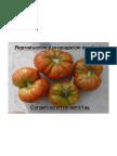 curso-semillas-jba (1).pdf