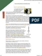 Understanding Kidney Yin and Kidney Yang