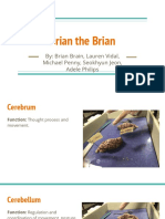 brain presentation - anatomy