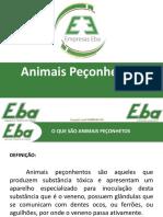 Animais Peçonhetos