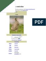 Historia Del Conejo