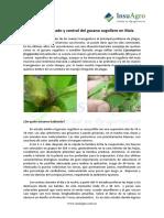 Insecticidas Manejo de Gusano Cogollero