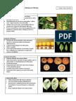 Deficiencias de Nutrientes en Cítricos