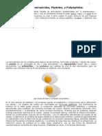 Proteínas, Aminoácidos, Péptidos, y Polipéptidos - Estructura Química (Página 1 de 2)