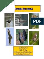Oiseaux L3