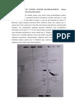 Signal sequences.docx