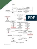 4. PATOFISIOLOGI TB MDR.docx