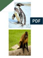 animales en peligro  de extincion+