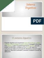 57978480-Sistema-dijestivo expo.pptx