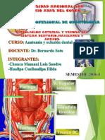 Circulacion Arterial y Venosa Del Sistema Dentario