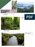 Tipos de Selva Imabenes