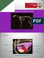 Torax-ARP.pps