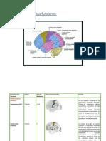 Corteza Cerebral y Sus Funciones