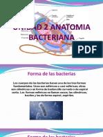 Unidad 2 Anatomia Bacteriana