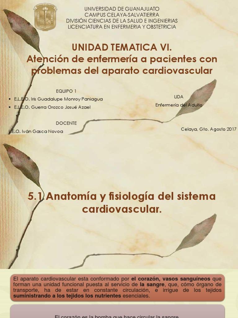 5.1 Anatomia Sistema Cardiaco