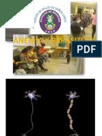 Anemia por Parasitosis