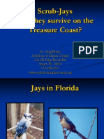 Scrub Jays Can They Survive on the Treasure Coast